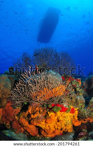 Dive Boat on Surface with Orange Sponges, Grand Cayman - stock photo