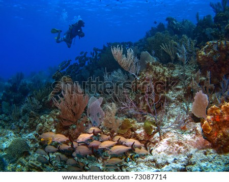 Dive Master on a reef in Cayman Brac - stock photo