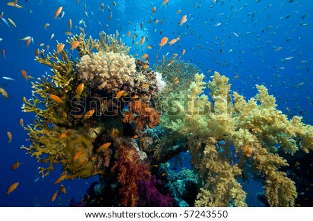 Dive on colorful coral reef - stock photo