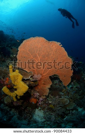 Diver above fan coral - stock photo