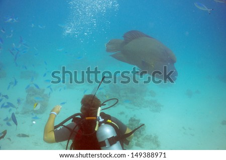 Diver and a huge Napoleon fish in background - stock photo