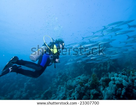 Diver and a large school of Barracudas over a reef - stock photo
