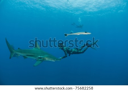 Diver and bull sharks - stock photo