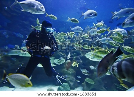 Diver and fishes. - stock photo