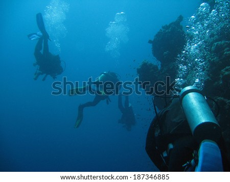 Diver and fishes  - stock photo