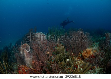 diver and reef - stock photo