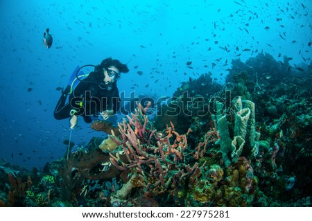 Diver and various coral reefs in Gili, Lombok, Nusa Tenggara Barat, Indonesia underwater photo. There are sponge Cribrochalina sp.