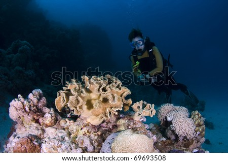 Diver behind coral on a reef in the Red Sea, Egypt - stock photo
