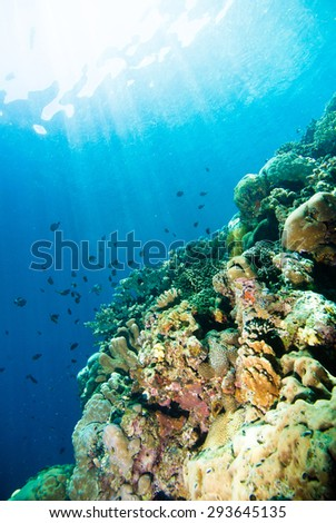 diver blue water scuba diving bunaken indonesia sea reef ocean - stock photo