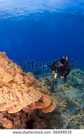 Diver checking out Mushroom Coral in Kona Hawaii - stock photo