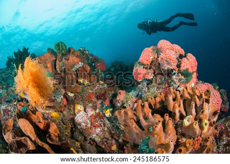 Diver, coral reef, sponge, sea fan in Ambon, Maluku, Indonesia underwater photo. The coral reefs are very colorful. - stock photo