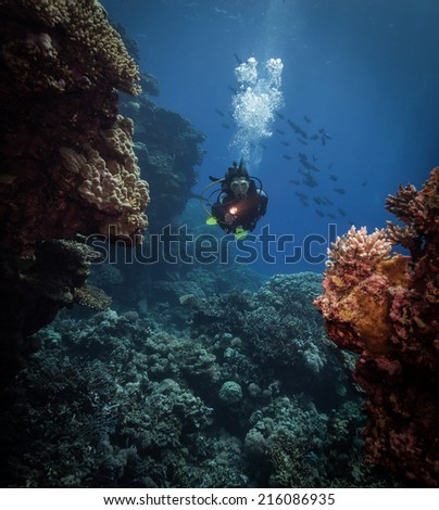 Diver explores the Malahi dive site, Fury Shoals, Red Sea, Egypt - stock photo