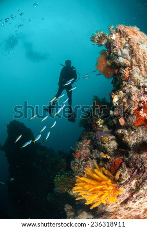 Diver, feather star, coral reef in Ambon, Maluku, Indonesia underwater photo. Group of yellowtail fusilier swimming through the diver.