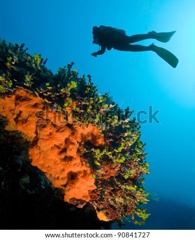 Diver in a colorful Mediterranean sea - stock photo