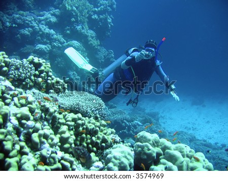 diver in deep. underwater photographer