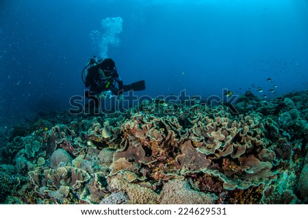 Diver is swimming above coral reefs in Gili, Lombok, Nusa Tenggara Barat, Indonesia underwater photo. there are a lot of hard coral