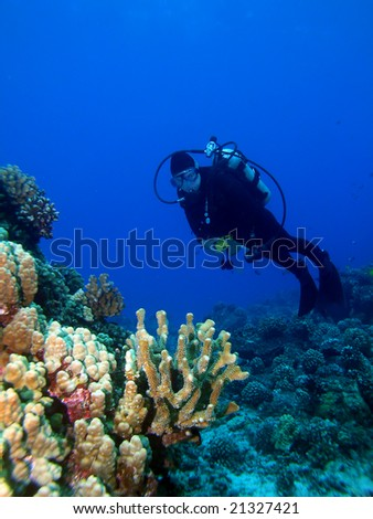 Diver looking at a Lighted Reef in Maui Hawaii - stock photo