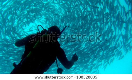 diver looking up to fish ball - stock photo