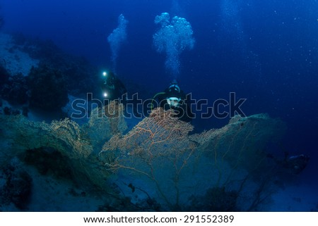 Diver on the reaf of Red sea - stock photo