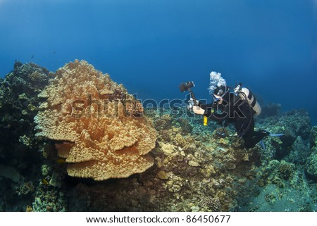 Diver photographing Mushroom Coral in Kona Hawaii - stock photo