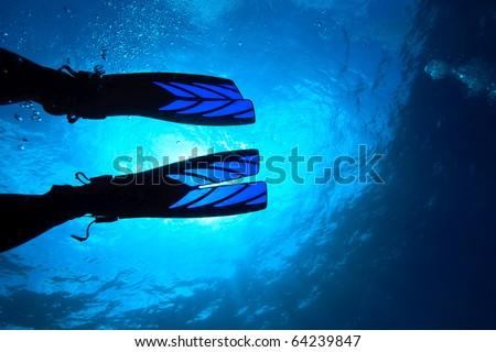 Diver's fin - stock photo
