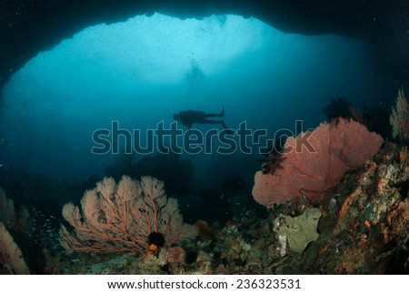 Diver, sea fan in Ambon, Maluku, Indonesia underwater photo. Diver swimming above, and there are a lot of sea fan Annella mollis in the bottom of the sea. - stock photo