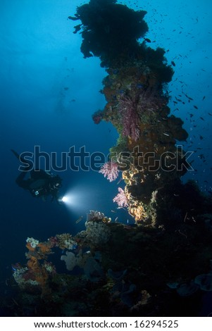 Diver shining light on vibrant coral living on the forward mast of a shipwreck. - stock photo