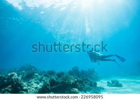 diver swimming in school of jack fish - stock photo