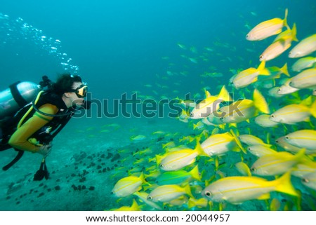 Diver swimming towards a school of yellow Snappers - stock photo