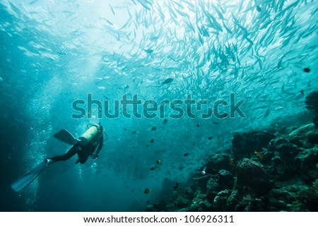 diver swims with fish