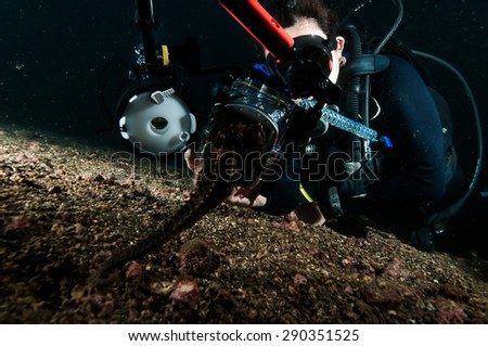 diver take photo video seahorse lembeh indonesia scuba diving - stock photo