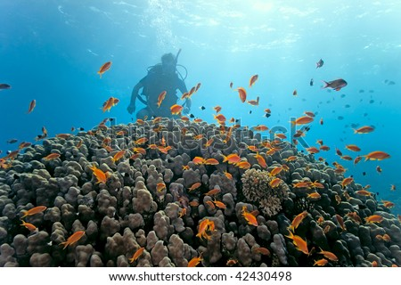 Diver under  coral reef - stock photo