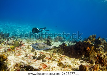 Diver with a scrawled file fish in Cozumel Mexico - stock photo