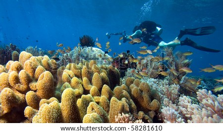 Diver with camera by coral reef - stock photo