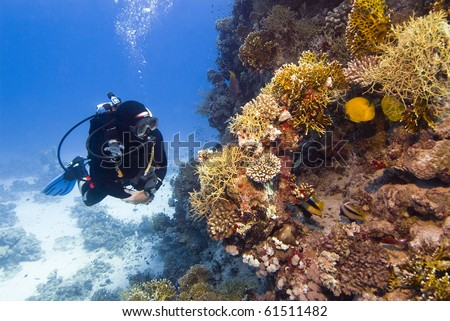 diver with colorful coral in the Red Sea - stock photo