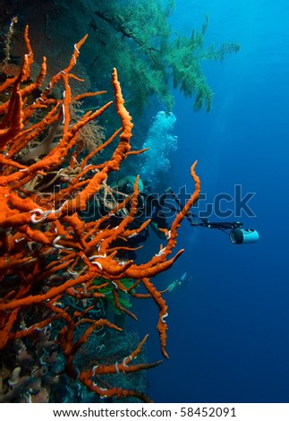 Diver with digital camera and red coral - stock photo