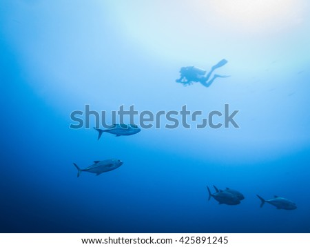 Diver with Giant Trevally  in blue sea water - stock photo