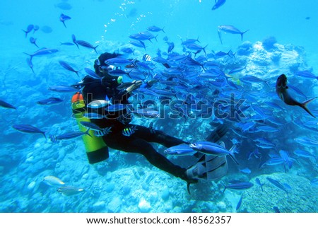 Diver with shoal of fish. Red Sea, Egypt - stock photo