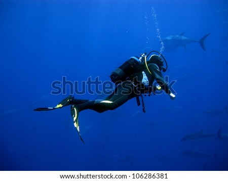 Diver with Tunas in the background