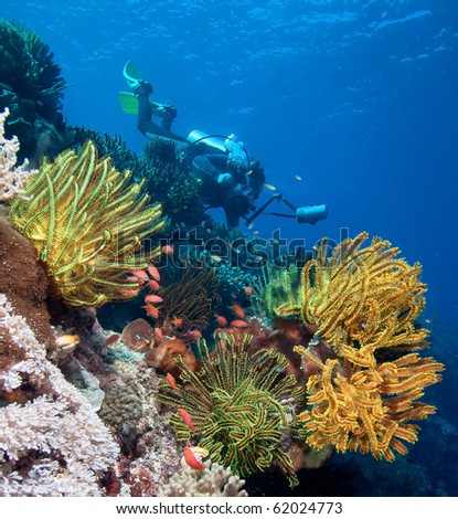 Diver with underwater camera by coral reef - stock photo