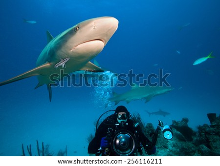 Diver with underwater photo equipment and caribbean reef sharks - stock photo