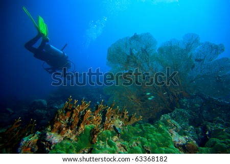 Diver yellow fin and sea fan - stock photo