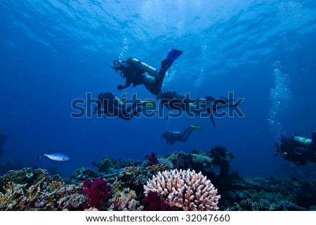 Divers above a colorful tropical reef - stock photo