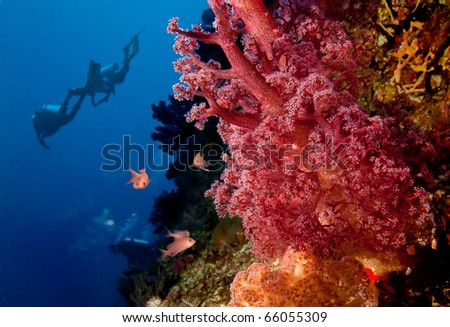 Divers and coral reef - stock photo