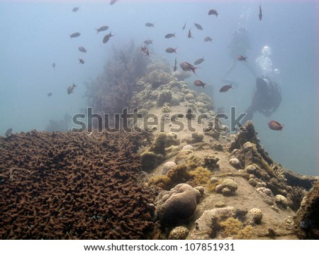 Divers around the artificial feer at Red sea - stock photo