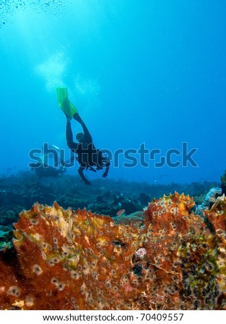 Divers by coral reef