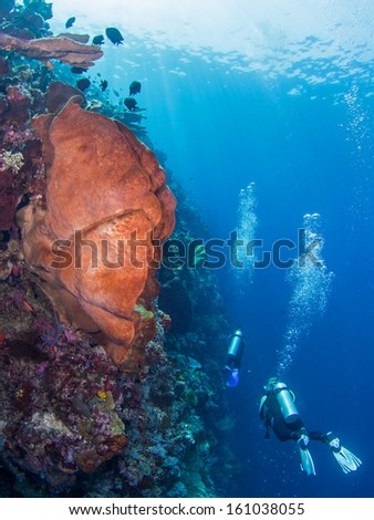 Divers during a wall dive at Bunaken, Indonesia - stock photo