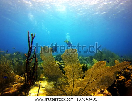 divers swimming above a beautiful underwater garden of coral in the Caribbean - stock photo