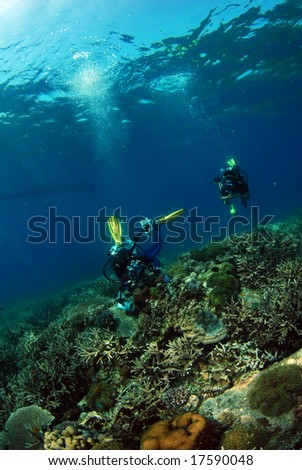 Divers with beautiful corals