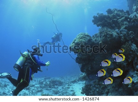 Divers with school of butterflyfish